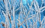 Frost warning as temperatures set to slump to - 2 degrees