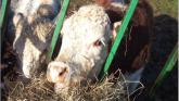 Fallen Animal Schemes for fallen farm stock