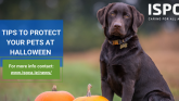 Donegal pet safety tips for a safe Halloween