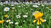 weather summer daisies