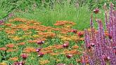 Gardening: Learn to love bold colour and summer smells