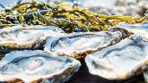 Marine experts warn people off eating shellfish from shores