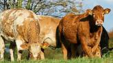 McConalogue welcomes Beef Finishers Payment to compensate beef farmers due to losses from COVID-19