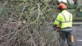 Hundreds of trees fell across Limerick after storm Darwin blew through the county on February 12