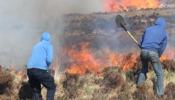 The option of bringing goats in to fight the incidence of gorse fires to be explored