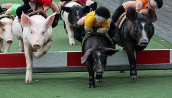 FLASHBACK FRIDAY: Pig Racing at the Salmon Inn, Mullinasole (2012)