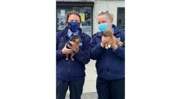 Tiny pups get the better of Donegal's new Community Policing Unit members
