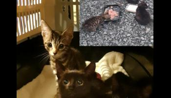 A Hundred rescued felines in Donegal need homes - Donegal Aninals in Need