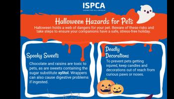 Haloween can be a scary time for pets and animals, say ISPCE
