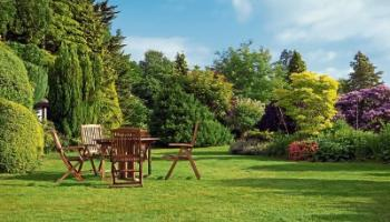 KILDARE GARDENING COLUMN: Beautiful and practical trees for your garden privacy