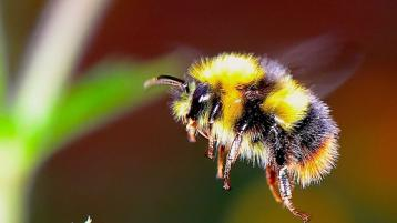 Donegal County Council committed to pollinators