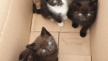 Kittens discovered 'dumped like trash' in a box in Castlefin