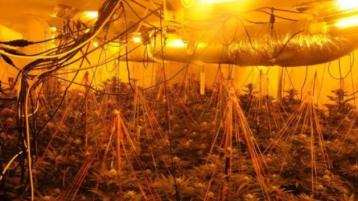 Two arrested following discovery of €240,000 cannabis grow house in north-west