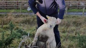 Donegal Gardaí have 'herd' it all