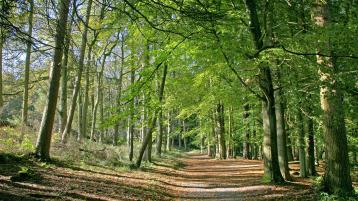Donegal firms involved in new national forestry group