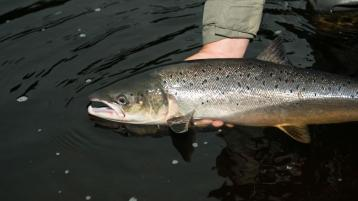 Loughs Agency renews appeal for Donegal anglers to 'catch and release'