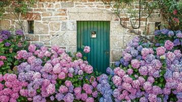 In the Garden with Jo: A new lease of life for the old favourite hydrangea