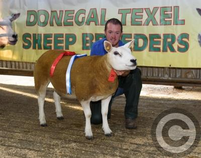 GALLERY: Top quality livestock at Donegal Texel Sheep
