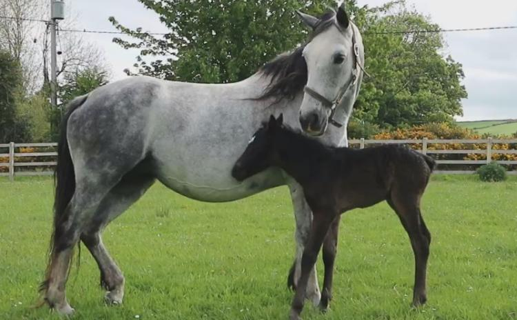 Can you help name  this beautiful foal born to pony rescued in Donegal?