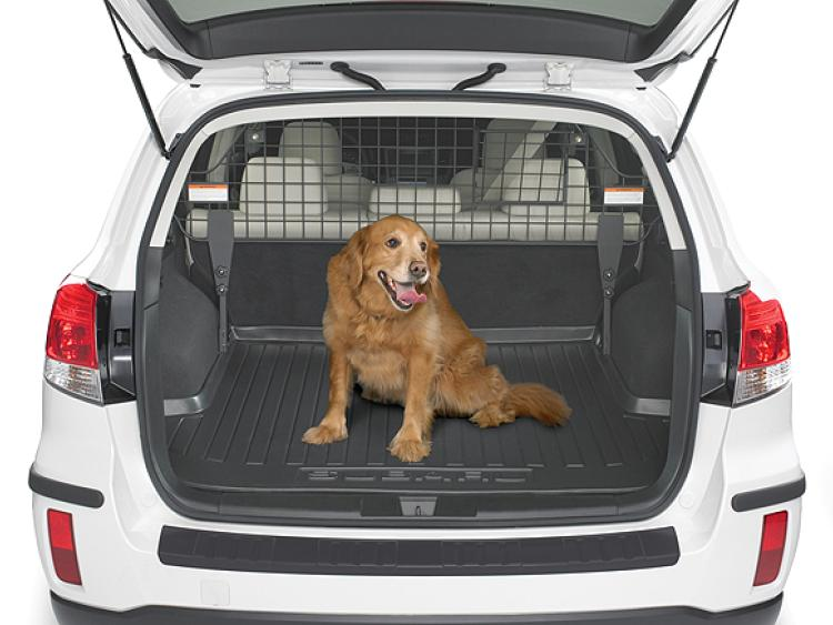 Have Pooch Will Travel How To Keep Your Pets Safe In The